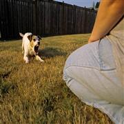 People aggression dog training Maryland
