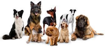 positive reinforcement dog training Silver Spring MD